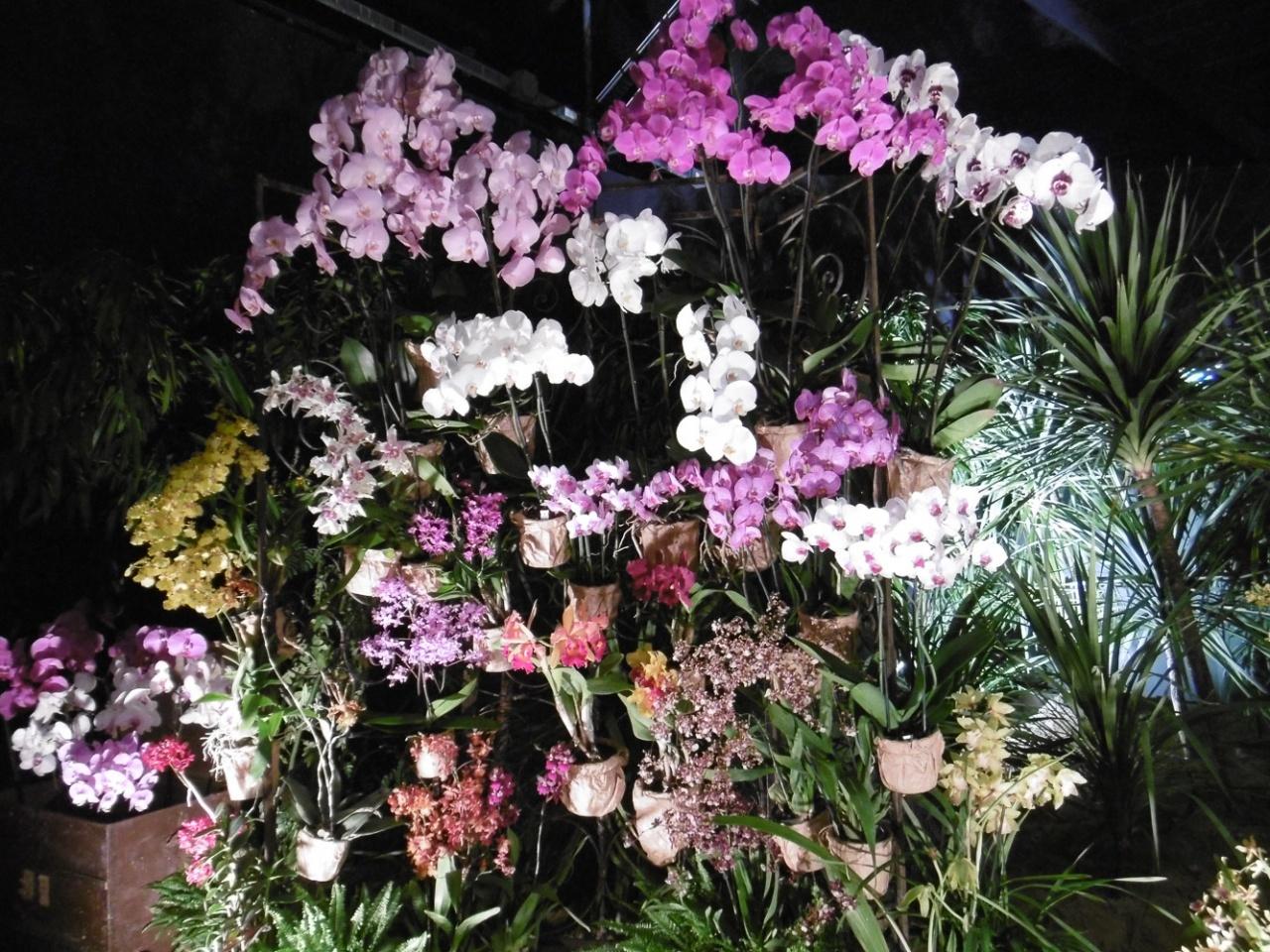 floralie2017_09.jpg